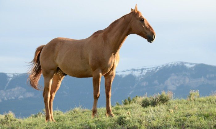 Brown horse stock image Unsplash