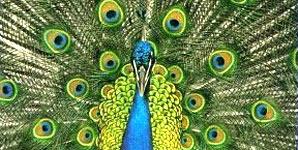 The Bluetones Expecting To Fly Album