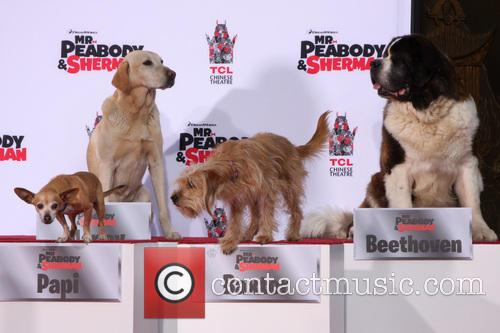 Marley, Papi, George Clooney The Dog and Beethoven