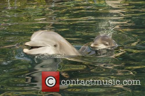 Discovery, Female Atlantic Bottlenose Dolphin and Born 2