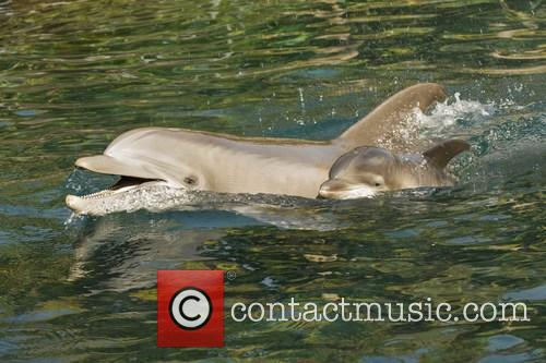 Discovery, Female Atlantic Bottlenose Dolphin and Born 3
