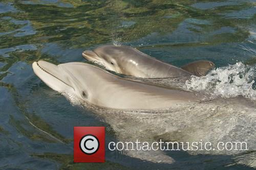 Discovery, Female Atlantic Bottlenose Dolphin and Born 1