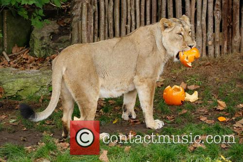 Halloween and London Zoo