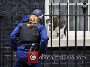 Larry the cat relaxes in the morning sun on the window sill of 10 Downing Street. London, England - 21.06.12